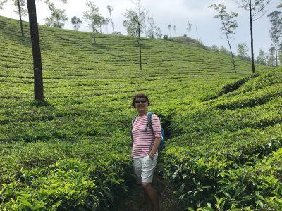 rando plantations de thé Munnar